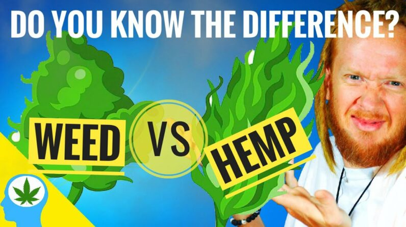 🤔Is Hemp Different From Weed?