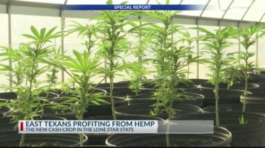 SPECIAL REPORT: How East Texans are cashing-in on hemp